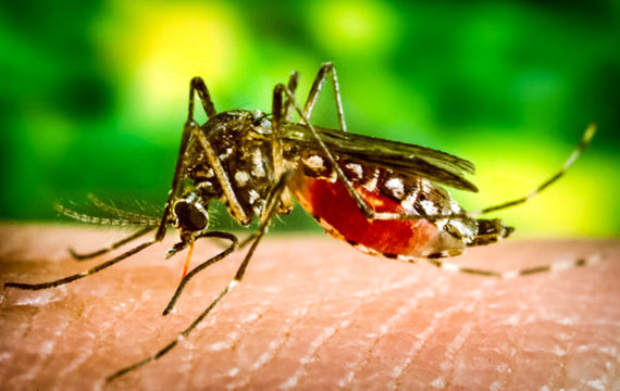 Harvard University researchers use Google data to track dengue fever